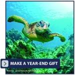 CAE_Pacific_YEG_Donate-Button_v1