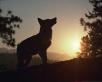 greywolf200x160