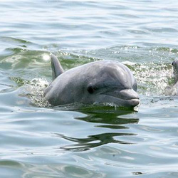 dolphin_copy