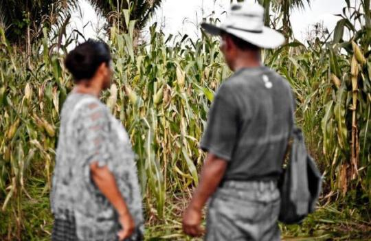 land-grabs-farmers-guatemala