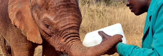zambia_elephant_orphanage_header3