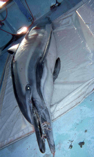 dolphin_FOIA_bycatch